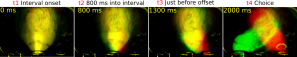 Imaged body positions where the rat will ultimately go left (red) and will ultimately go right (green) are overlaid.